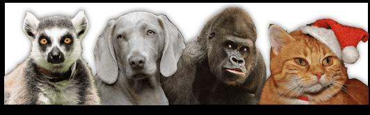 Animals-Summary